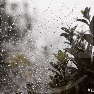 Agua - Lluvia hilada