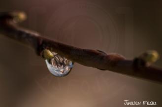 Agua - Mirando las flores del almendro en una gota de agua
