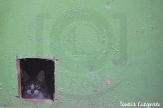 Espacio negativo - El escondite de Don Gato