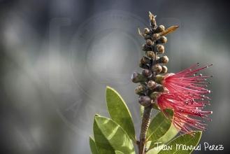 Espacio negativo - Floreciendo