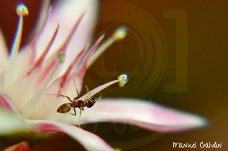 Desenfoque - Hormiga