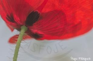Detalle floral - Con los pelos de punta