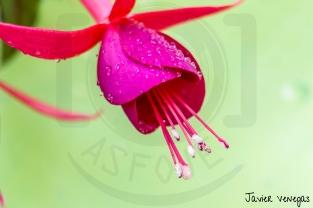 Detalle floral - Pendiente de reina
