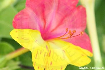 Detalle floral - Sueño de primavera