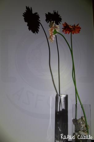 Sombras - Sombra Transparente